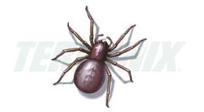 Araña de Tierra