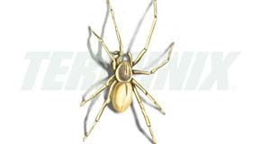 Araña del Saco Amarillo