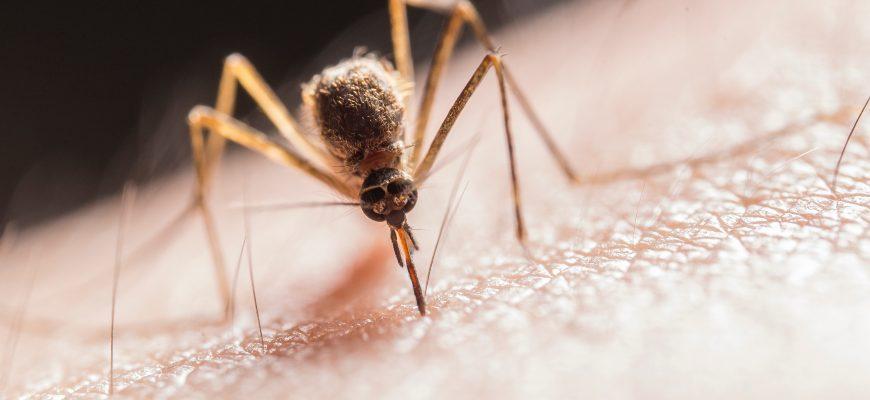 Eliminando mosquitos en Panamá
