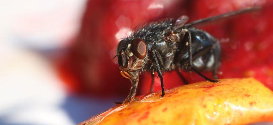 Nuestro método para eliminar moscas
